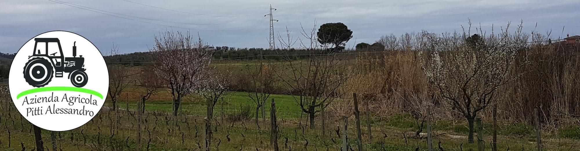Azienda Agricola Pitti Alessandro